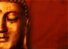 buddha for posters